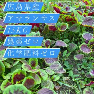 広島県産 【アマランサス15kg】農薬ゼロ化学肥料ゼロ(野菜)