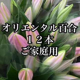 ご家庭用 オリエンタル百合 優品(その他)
