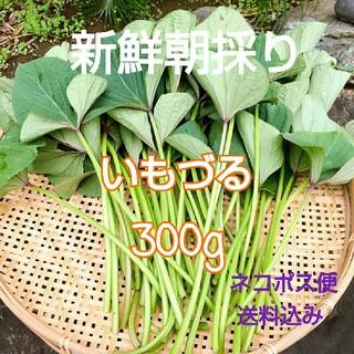新鮮朝採り【さつまいもつる】300g  農薬不使用♪(野菜)