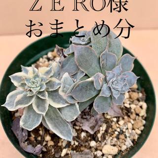 ZERO様 おまとめ分(その他)