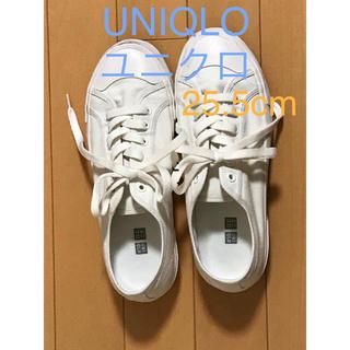 ユニクロ(UNIQLO)のUNIQLO ユニクロ コットンキャンバススニーカー 25.5cm(スニーカー)
