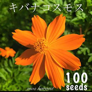 ◆キバナコスモス/黄花秋桜◆ 【オーガニック種子 100粒】(その他)