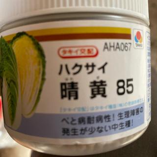 白菜 晴黄85 タキイ 4缶セット(野菜)