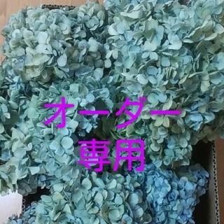 【オーダー再開】第二期 天然アジサイ ドライフラワー  緑青~ベージュ~紫(ドライフラワー)