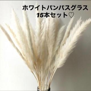 ホワイトパンパスグラス15本(ドライフラワー)