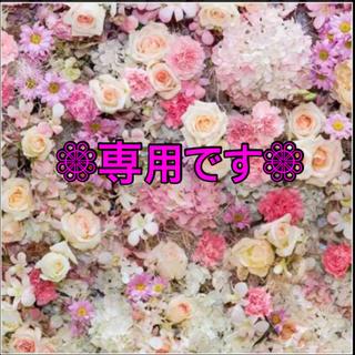 PAUL & JOE - 【新品未開封】カモキャット ストライプ柄 ストッキング ヌーディベージュ