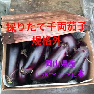 たっぷり召し上がれ🍆お多福野菜🍆千両茄子🍆規格外(野菜)