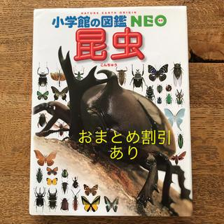 小学館 - 小学館の図鑑NEO 「昆虫」