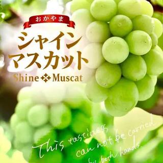 送料無料◆朝摘◆岡山産 晴王◆シャインマスカット(フルーツ)