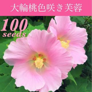 ◆可憐な桃色大輪一重咲き◆  芙蓉/日本芙蓉 【オーガニック種子 100粒】(その他)