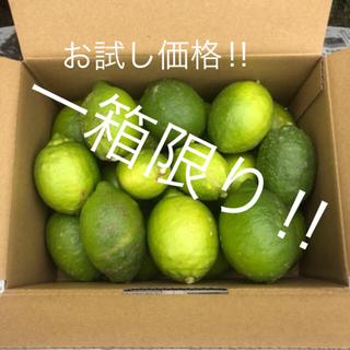 『お試し価格‼︎』山口県産レモン 2.8kg (無農薬ではありません)(フルーツ)
