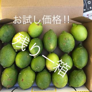 『お試し価格‼︎』山口県産レモン 1.3kg(フルーツ)