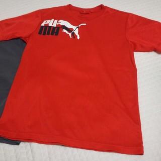 PUMA - プーマ 可愛い朱赤色Tシャツ インナー次第でオールシーズンオッケー!160㎝