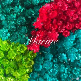スターフラワー ブロッサム クリスマスカラー 90輪 ハーバリウム花材(ドライフラワー)