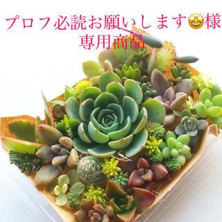 プロフ必読お願いします🤩様 専用商品 多肉植物 七福神メイン セット(その他)