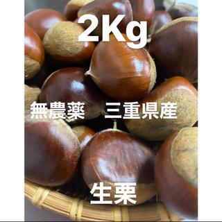 生栗 2キロ 送料込み 無農薬(野菜)
