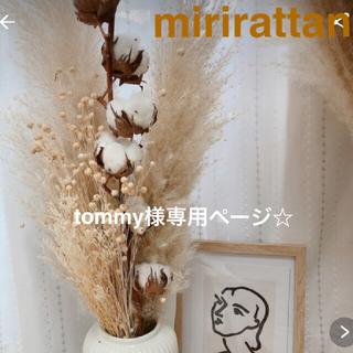 パンパスグラス tommy様専用ページ☆(ドライフラワー)