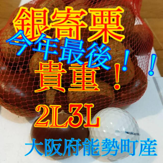 栗 銀寄栗 食品/飲料/酒の食品(野菜)の商品写真
