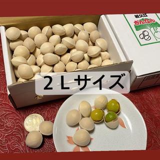 名産地愛知県稲沢市祖父江銀杏 2Lサイズ