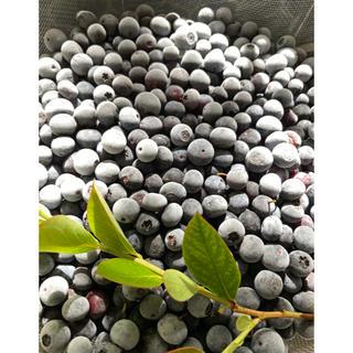 無農薬完熟冷凍ブルーベリーミックス 3kg(フルーツ)