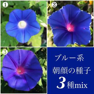 ◆ 青色系朝顔の種子 ◆3種◆鮮やかなブルー系!【30粒】数量限定(その他)
