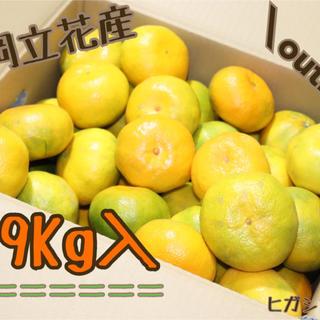 【訳あり】みかん 9kg *福岡立花産* 産地直送・農家直送(フルーツ)