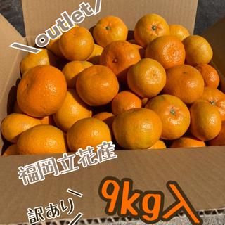 【訳あり】 みかん 9kg *福岡立花産* 産地直送・農家直送(フルーツ)