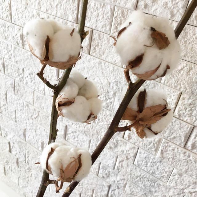 【送料込】コットンフラワー ホワイト2本セット★スワッグ ハンドメイドのフラワー/ガーデン(ドライフラワー)の商品写真