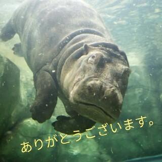 ミズノ(MIZUNO)の〈140〉JSS mizuno ミズノ 競泳水着(下着)