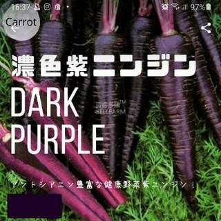 ニンジン⑤【濃い色紫ニンジン】種子30粒(その他)