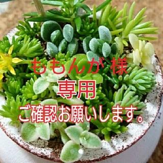 【ももんが様 専用】多肉植物 葉挿し 7枚(その他)
