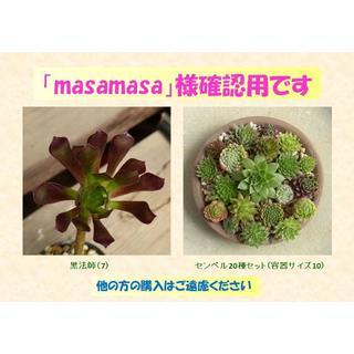 多肉植物 【0448】  まとめ買い「黒法師」&「センペル20種セット」(その他)