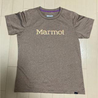 マーモット(MARMOT)のマーモット レディースTシャツ Mサイズ 四隅ゆり(登山用品)
