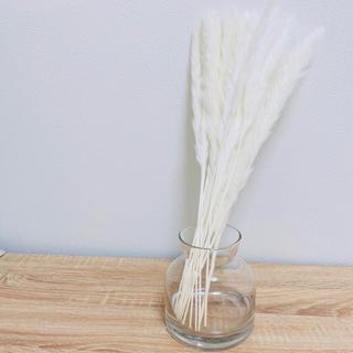 フランフラン(Francfranc)のホワイトパンパスグラス 21本セット(ドライフラワー)