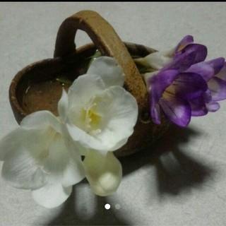 フリージア 球根 白 紫 花  ガーデニング 植物 チューリップ バラ コスモス(その他)