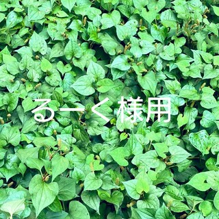 POLO RALPH LAUREN - 【新品】 ウールブレンド カーディガン