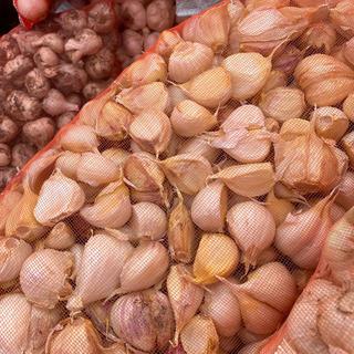 青森県産バラニンニク10kgサイズSメイン(野菜)