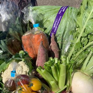 朝採り選べる野菜セット80サイズ(野菜)