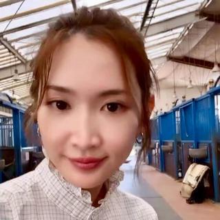 UNIQLO - ★新品 完売品 紗栄子さん着用♡ ユニクロ イネス 上質 コットンフリルシャツ