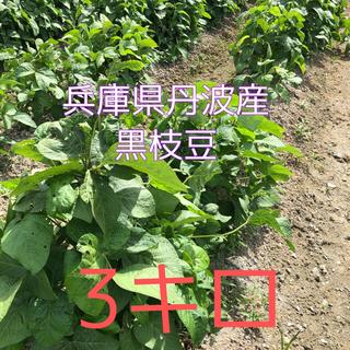 丹波産 黒枝豆 3キロ 期間限定 無農薬(野菜)