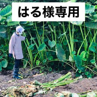 【はる様】専用ページです!(野菜)