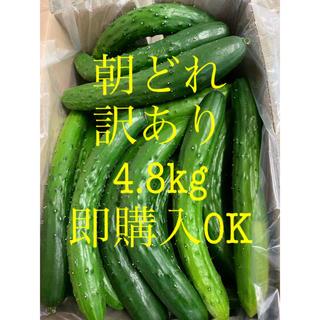 朝どれ 農家直送 きゅうり 訳あり 4.8kg キュウリ 野菜(野菜)