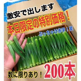 【特別価格】宮古島産 おくら オクラ 200本(野菜)