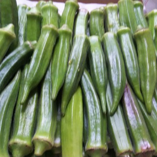 鹿児島産オクラ 1キロ(野菜)