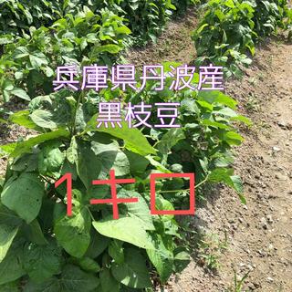 丹波産 黒枝豆 1キロ 期間限定 無農薬(野菜)