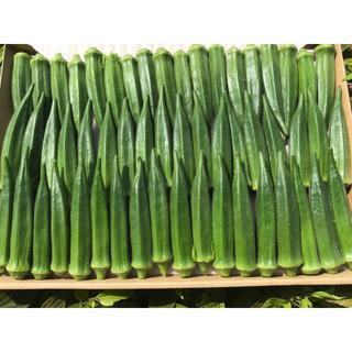 オクラ(野菜)