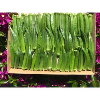 オクラB(野菜)