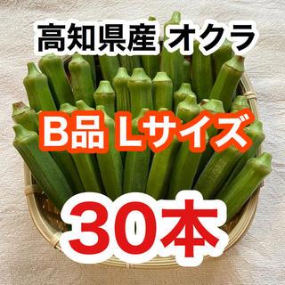 高知県産おくら B品(Lのみ) 30本 即購入OK オクラ(野菜)