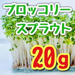 【最多☆最安値】ブロッコリースプラウト 種 20g以上!
