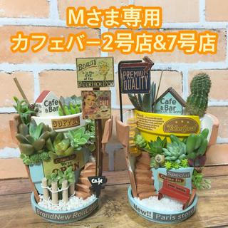 多肉植物の寄せ植え 丘の上のカフェバー2号店&7号店(その他)